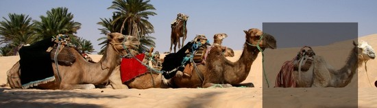 Sahara Tourism Day